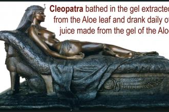 Sejarah Aloe Vera