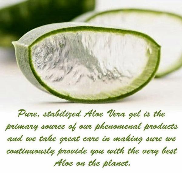 Khasiat Aloe Vera