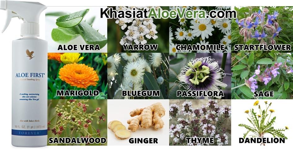 Khasiat Aloe Vera Lidah Buaya - Forever Aloe First