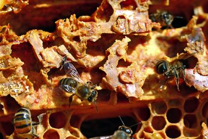 Khasiat Bee Propolis | Forever Bee Propolis – Air Liur Lebah Antibiotik Semulajadi Terbaik!