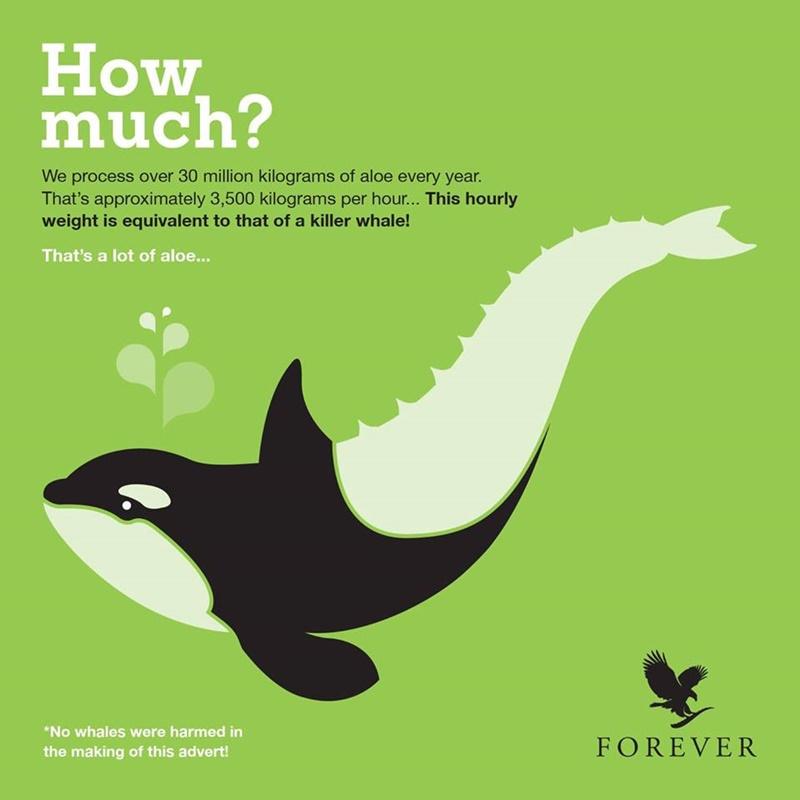 Khasiat Aloe Vera | Forever Living Products Memproses 3,500 Kg Aloe Vera Setiap Hari Bersamaan Berat Seekor Ikan Paus!