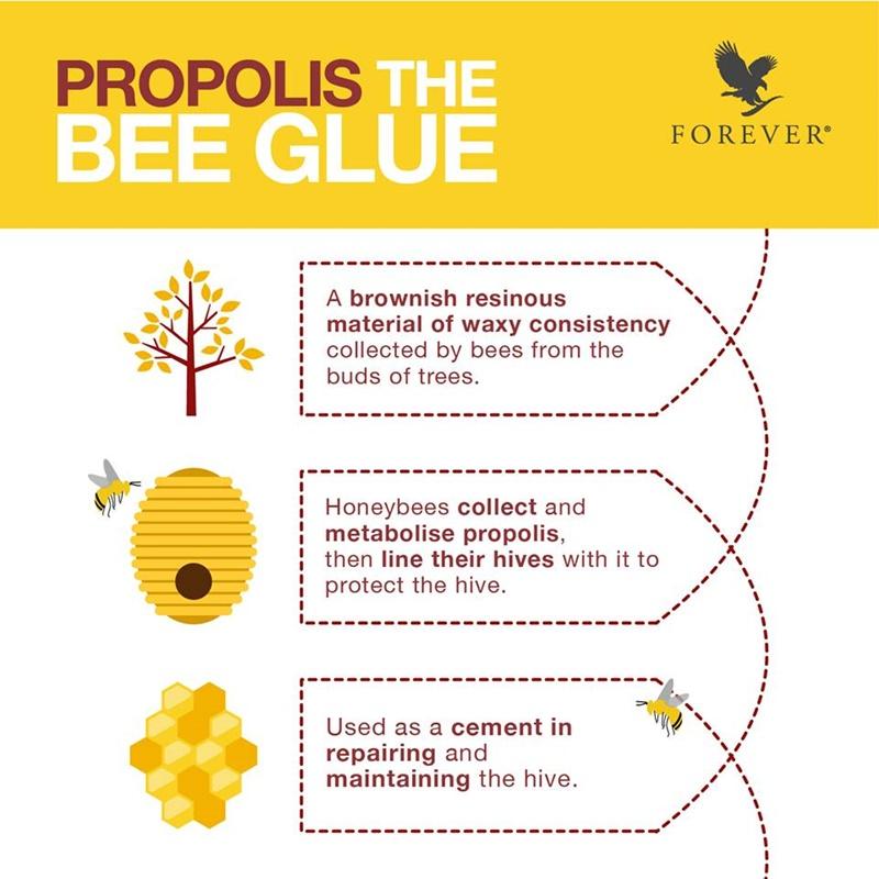 Khasiat Bee Propolis | Kenapa Lebah Menghasilkan Bee Propolis?